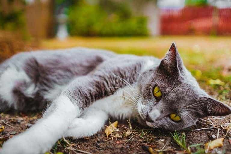 Is Honey Safe for Cats