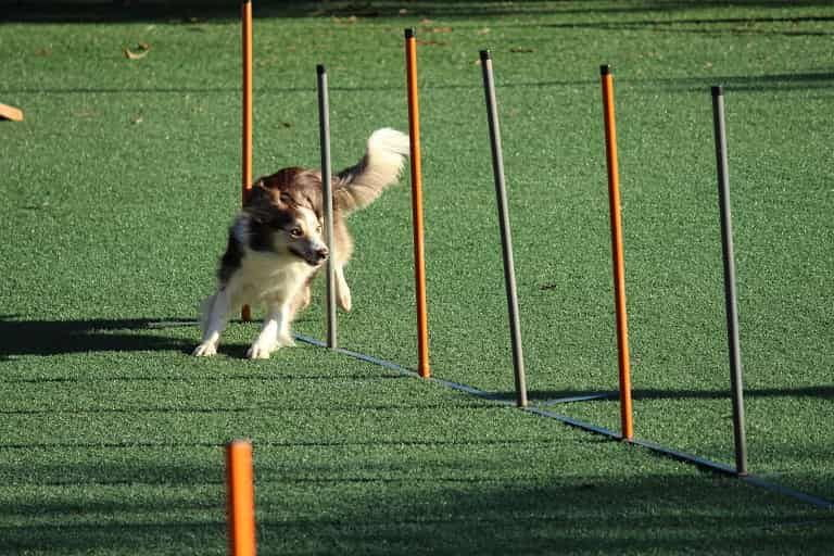 How Old Is Too Old to Train A Dog