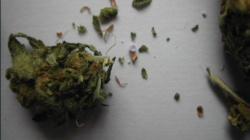 PCP Laced Weed