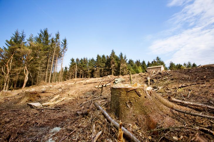 professional land clearing services expert