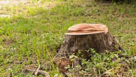 affordable stump grinding services