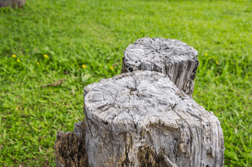 Stump Grinding Smyrna