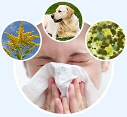 Person sneezing in circle with three circles of goldenrods, dog, cat, dust mites on blue background