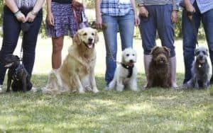 A Group of Leashed Dogs