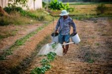 Roundup Weed Killer- Are You at Risk?