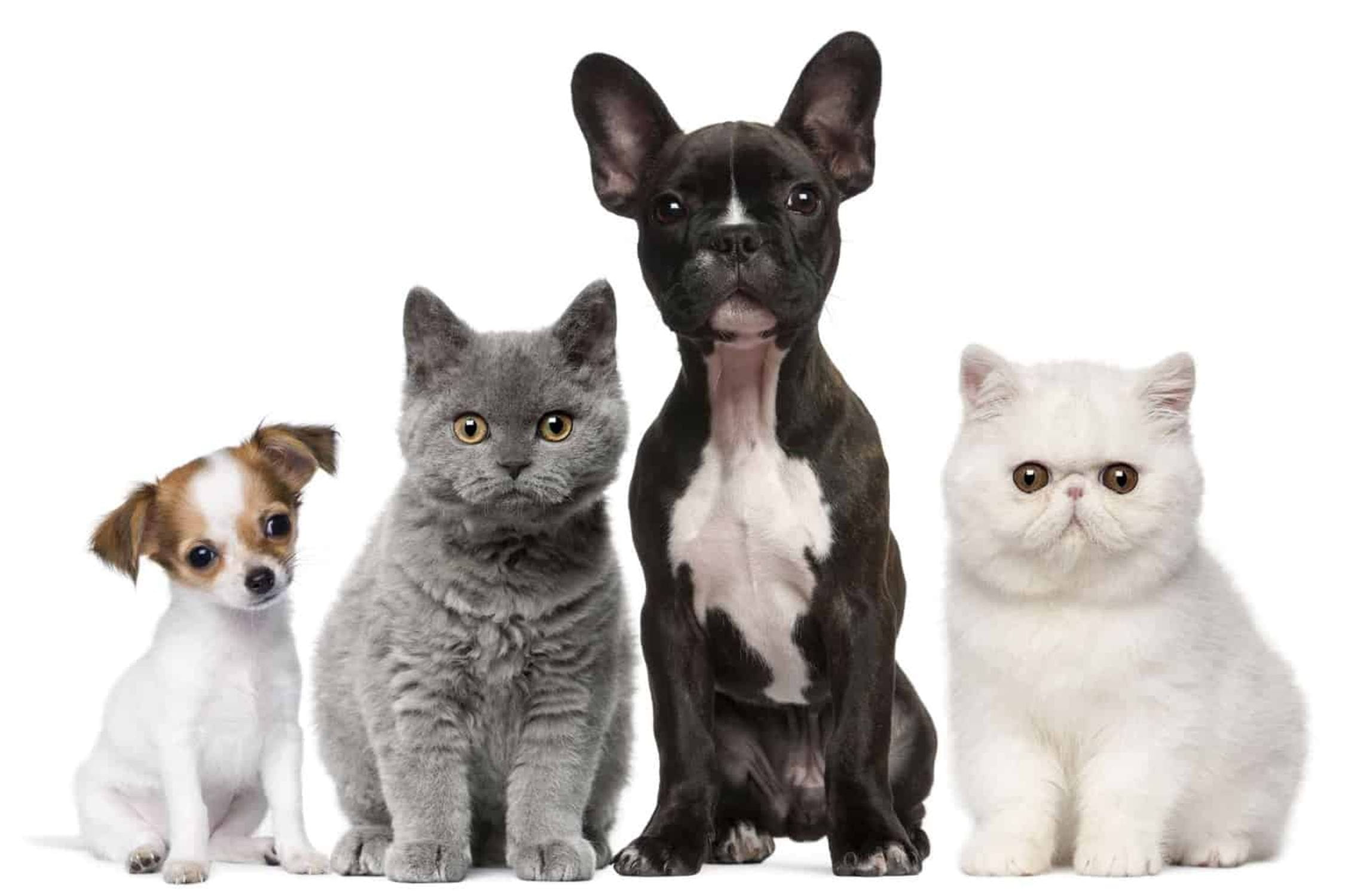 Two cats and two dogs.