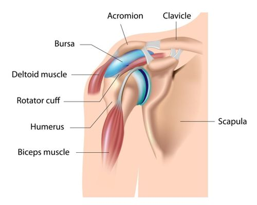 Shoulder Injury Bicep Tears and Bursitis