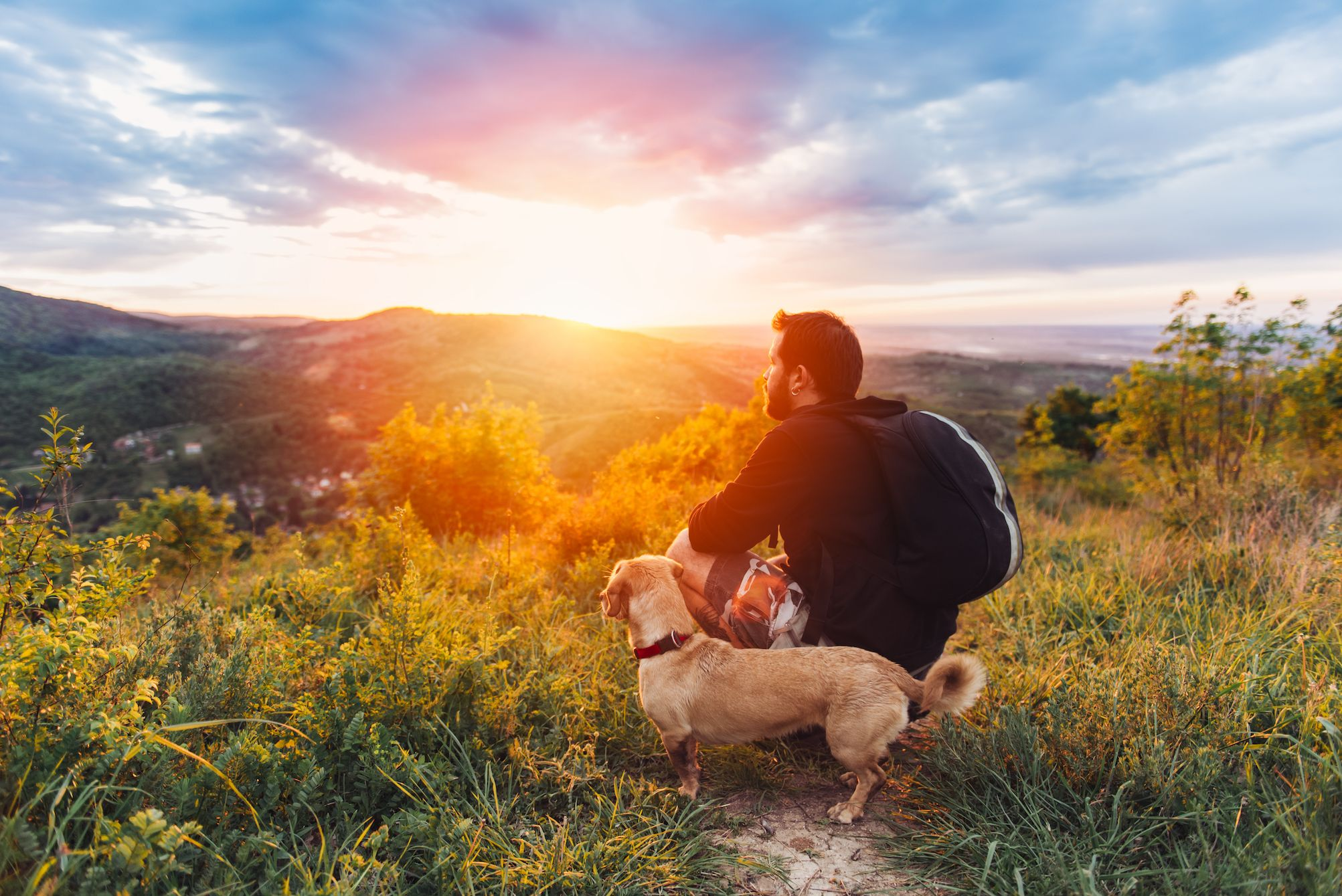 dog with man on hill