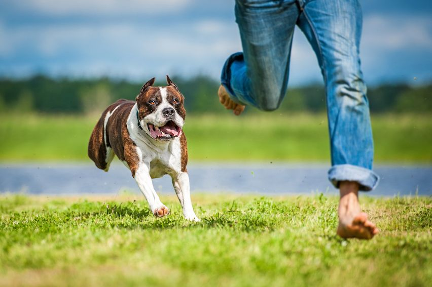 dog chasing person