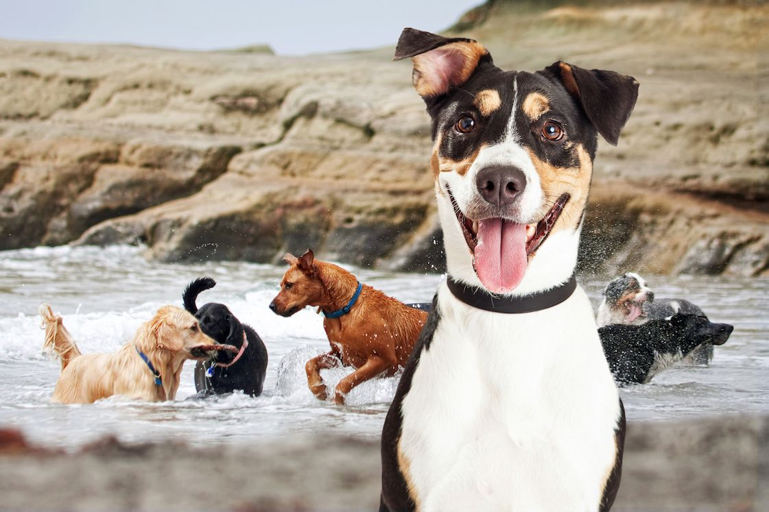happy dogs playing in water