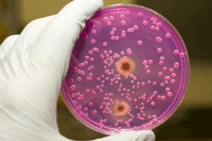 Candida Yeast from Source: Candida Hub