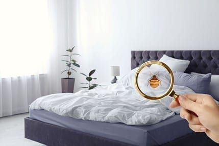 Bed bug image in magnifying glass with bed in background