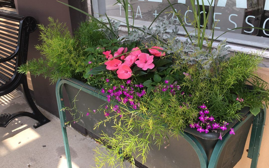LakewoodAlive's Flower Blossoms Program Beckons Summer with Beautiful Blooms