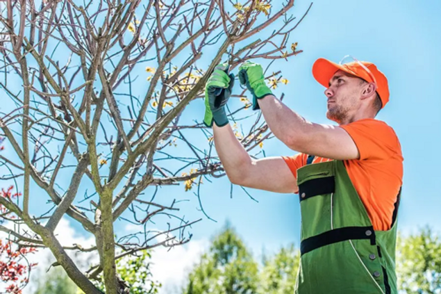Tree Service Peachtree Corners 1226 Ardsley Pl Norcross, GA 30093 770-373-4976 https://treeservicepeachtreecorners.com https://google.com/search?q-tree+service+peachtree+corners&knonly&kgmid=/g/11hgsymvgq https://www.google.com/maps/place/Tree+Service+Peachtree+Corners/@33.9604395,-84.2902622,12z/data=!3m1!4b1!4m5!3m4!1s0x0:0x269977db8bb33741!8m2!3d33.9604593!4d-84.2202221?shorturl=1 https://tree-service-peachtree-corners.business.site/ Tree Service, Tree Removal, Tree Trimming, Tree Care, Arborist, Stump Grinding