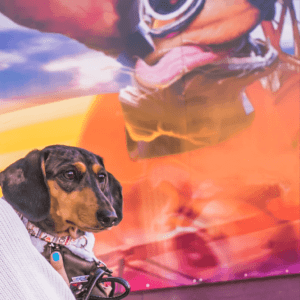 mural event with rocky