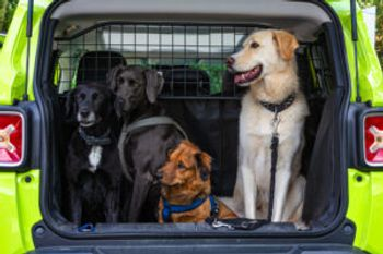 4 dogs sitting at the trunk car