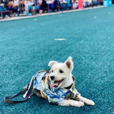 The Animal Foundation's 18th Annual Best in Show
