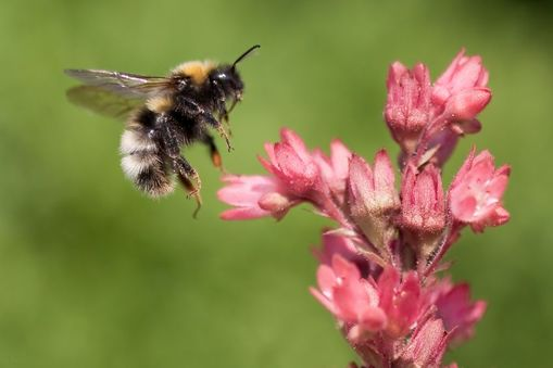 Attracting leads like bees to a flower