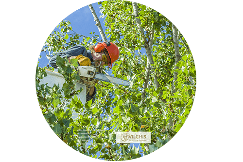 Vilchis Tree Service of Fayetteville 330 Rabbits Run Fayetteville, GA 30214 (404) 835-8829 https://treeservicefayettevillega.comTree Service, Tree Removal, Tree Trimming, Arborist, Stump Grinding, Land Clearing