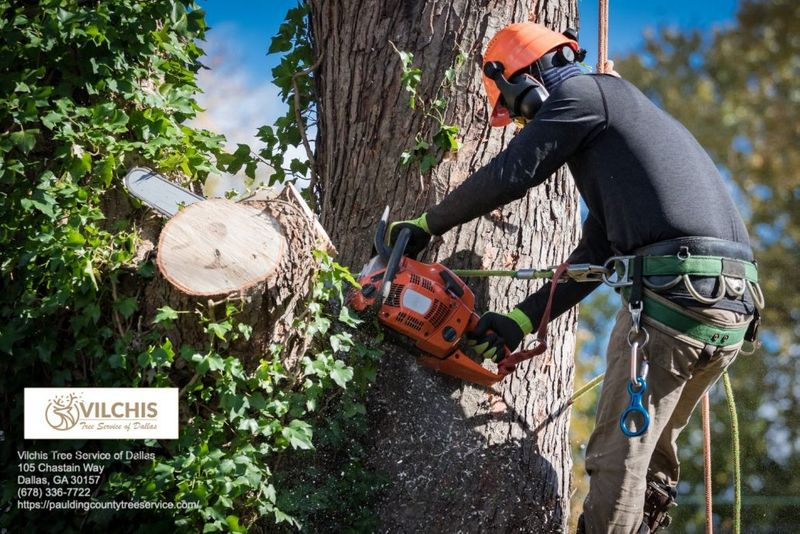 Vilchis Tree Service of Dallas 105 Chastain Way Dallas, GA 30157 (678) 336-7722 https://pauldingcountytreeservice.com/ Tree Service, Tree Removal, Tree Trimming, Arborist, Tree Cabling, Land Clearing, Stump Grinding, Emergency Tree Service